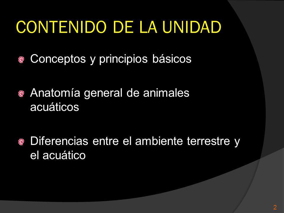CONTENIDO DE LA UNIDAD Conceptos y principios básicos