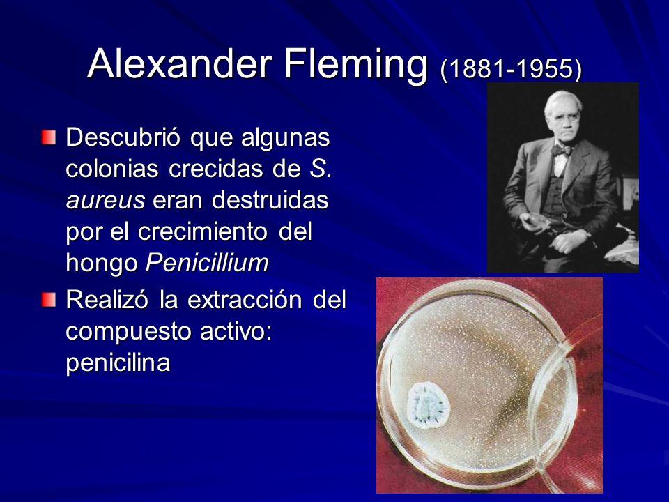 Alexander Fleming (1881-1955) Descubrió que algunas colonias crecidas de S. aureus eran destruidas por el crecimiento del hongo Penicillium.