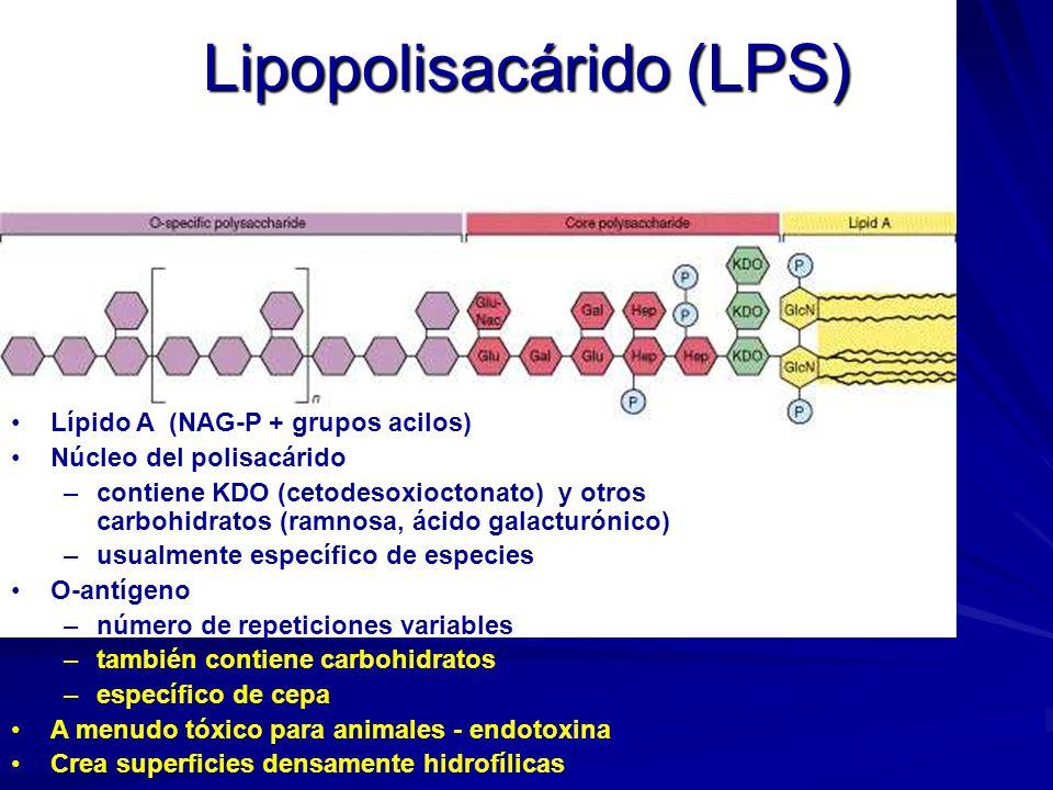Lipopolisacárido (LPS)