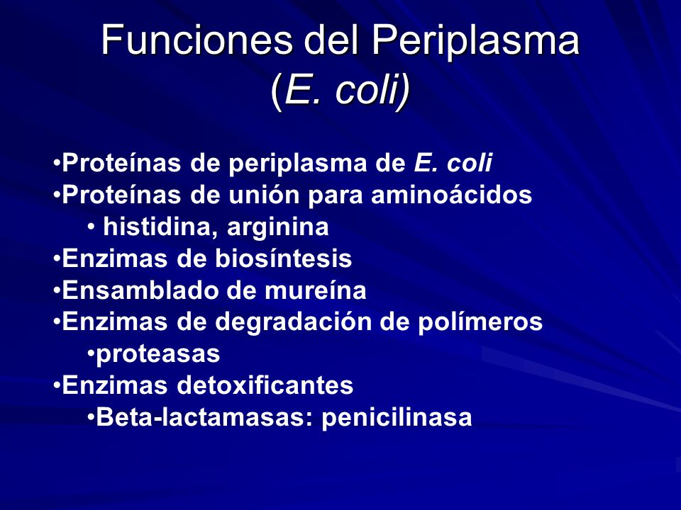 Funciones del Periplasma (E. coli)