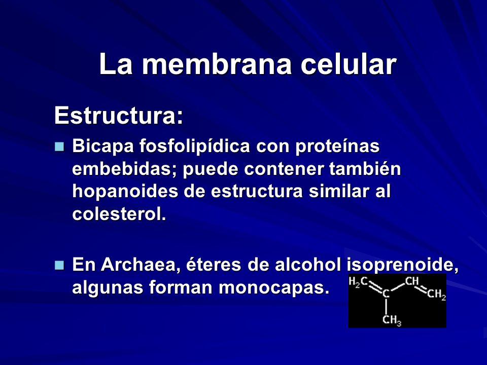 La membrana celular Estructura: