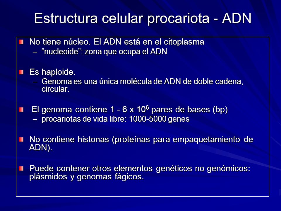 Estructura celular procariota - ADN