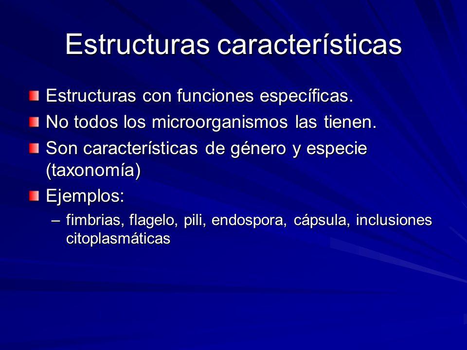 Estructuras características