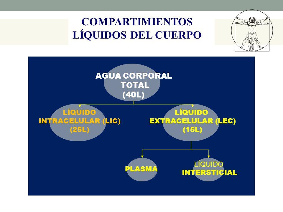 COMPARTIMIENTOS LÍQUIDOS DEL CUERPO