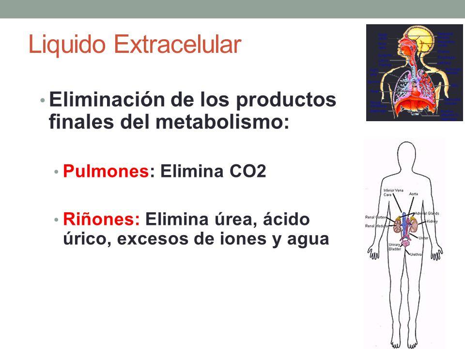 Liquido Extracelular Eliminación de los productos finales del metabolismo: Pulmones: Elimina CO2.