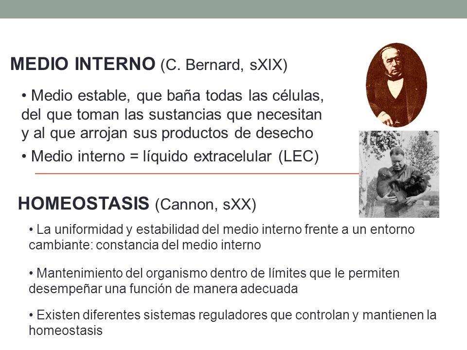MEDIO INTERNO (C. Bernard, sXIX)
