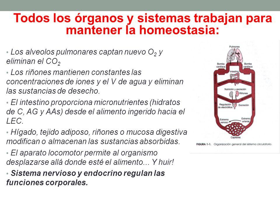 Todos los órganos y sistemas trabajan para mantener la homeostasia: