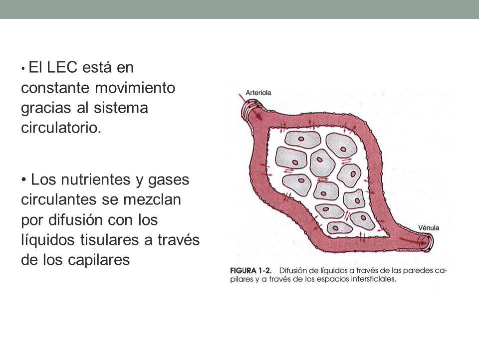 El LEC está en constante movimiento gracias al sistema circulatorio.