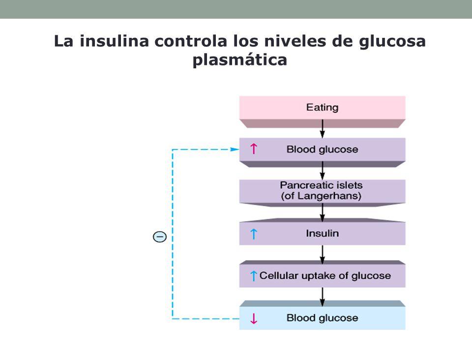 La insulina controla los niveles de glucosa plasmática