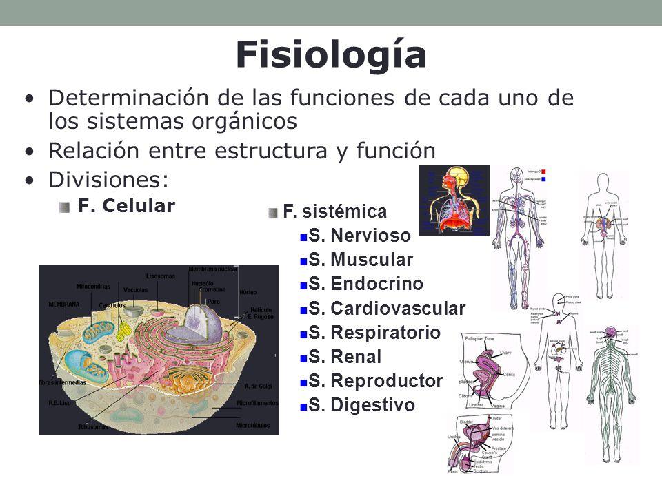 Fisiología Determinación de las funciones de cada uno de los sistemas orgánicos. Relación entre estructura y función.