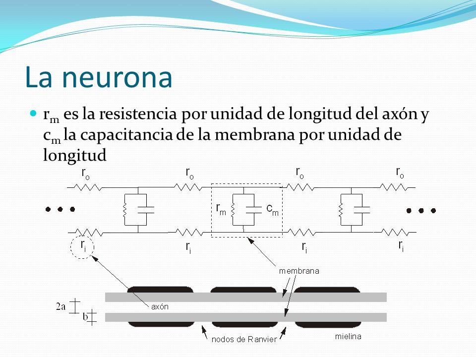 La neurona rm es la resistencia por unidad de longitud del axón y cm la capacitancia de la membrana por unidad de longitud.