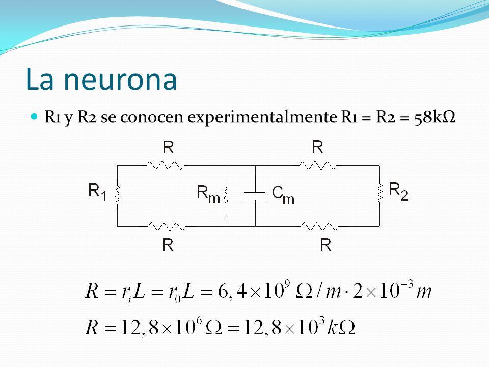 La neurona R1 y R2 se conocen experimentalmente R1 = R2 = 58kΩ
