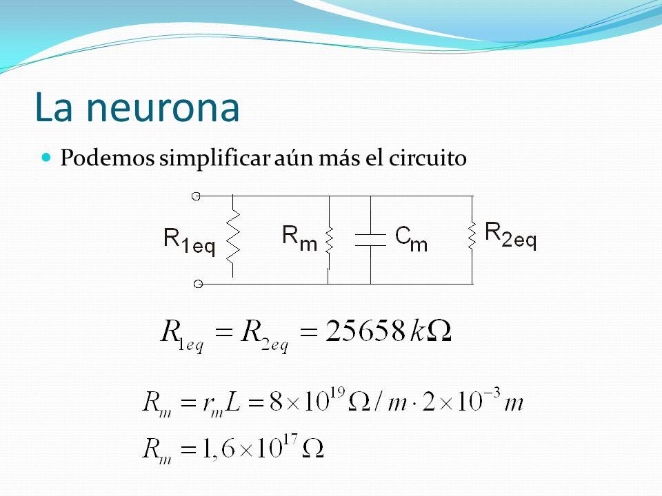 La neurona Podemos simplificar aún más el circuito