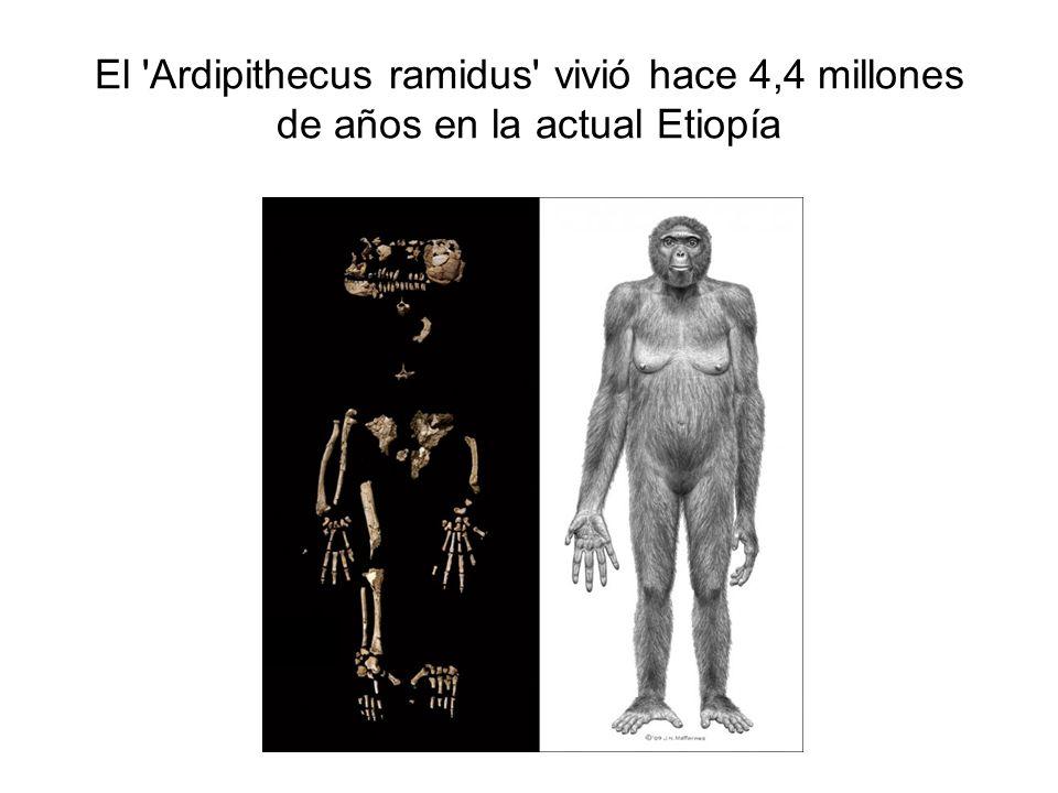 El Ardipithecus ramidus vivió hace 4,4 millones de años en la actual Etiopía