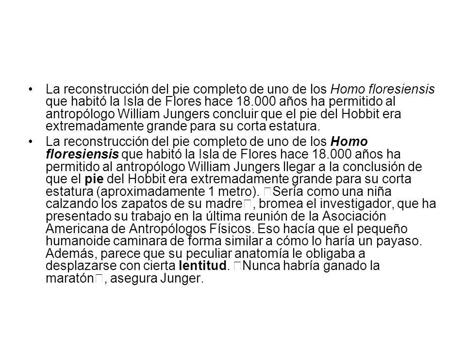 La reconstrucción del pie completo de uno de los Homo floresiensis que habitó la Isla de Flores hace 18.000 años ha permitido al antropólogo William Jungers concluir que el pie del Hobbit era extremadamente grande para su corta estatura.