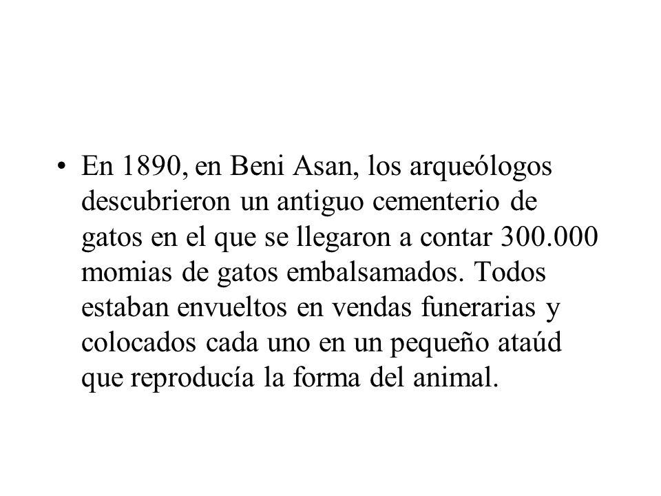 En 1890, en Beni Asan, los arqueólogos descubrieron un antiguo cementerio de gatos en el que se llegaron a contar 300.000 momias de gatos embalsamados.