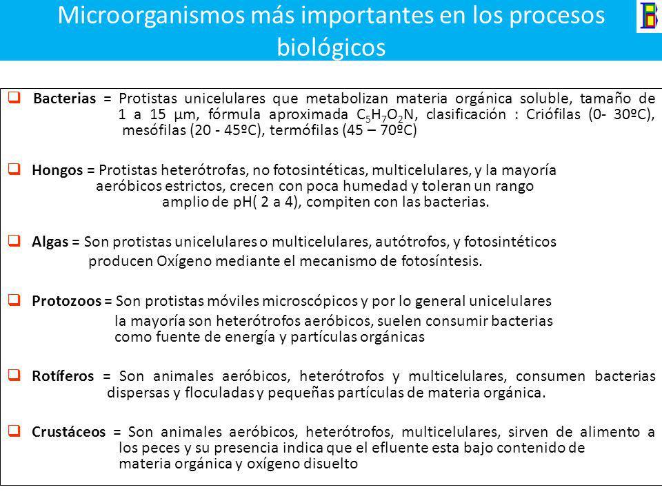 Microorganismos más importantes en los procesos biológicos