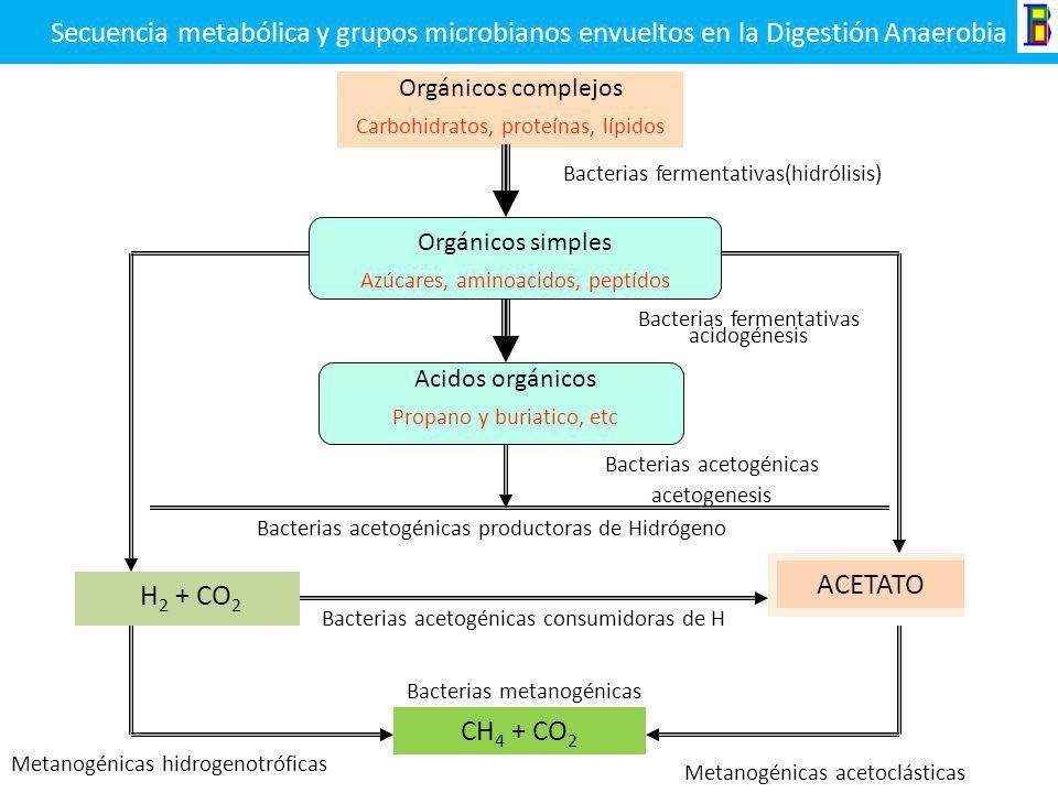 Secuencia metabólica y grupos microbianos envueltos en la Digestión Anaerobia