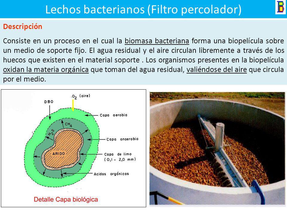Lechos bacterianos (Filtro percolador)