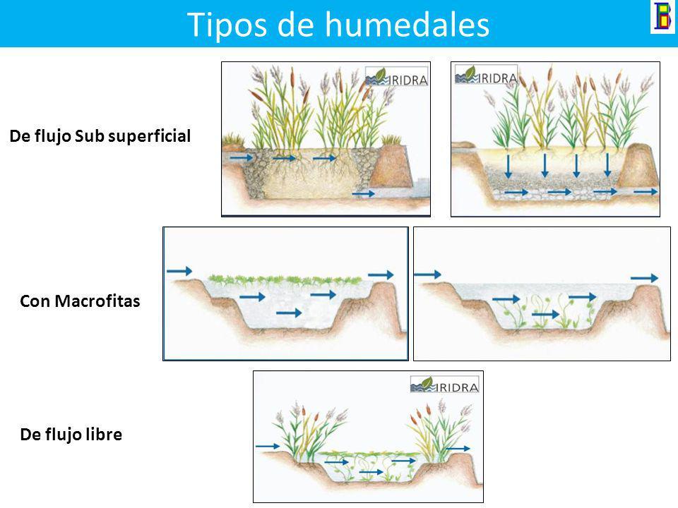 Tipos de humedales De flujo Sub superficial Con Macrofitas