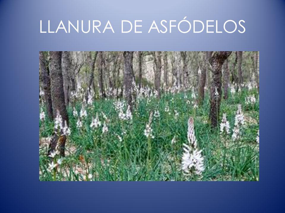 LLANURA DE ASFÓDELOS FLORES RELACIONADAS CON LOS DIFUNTOS QUE SE COLOCABAN EN LAS TUMBAS.