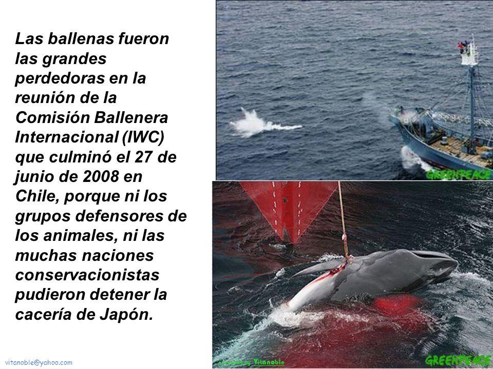 Las ballenas fueron las grandes perdedoras en la reunión de la Comisión Ballenera Internacional (IWC) que culminó el 27 de junio de 2008 en Chile, porque ni los grupos defensores de los animales, ni las muchas naciones conservacionistas pudieron detener la cacería de Japón.