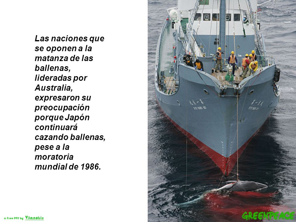 Las naciones que se oponen a la matanza de las ballenas, lideradas por Australia, expresaron su preocupación porque Japón continuará cazando ballenas, pese a la moratoria mundial de 1986.