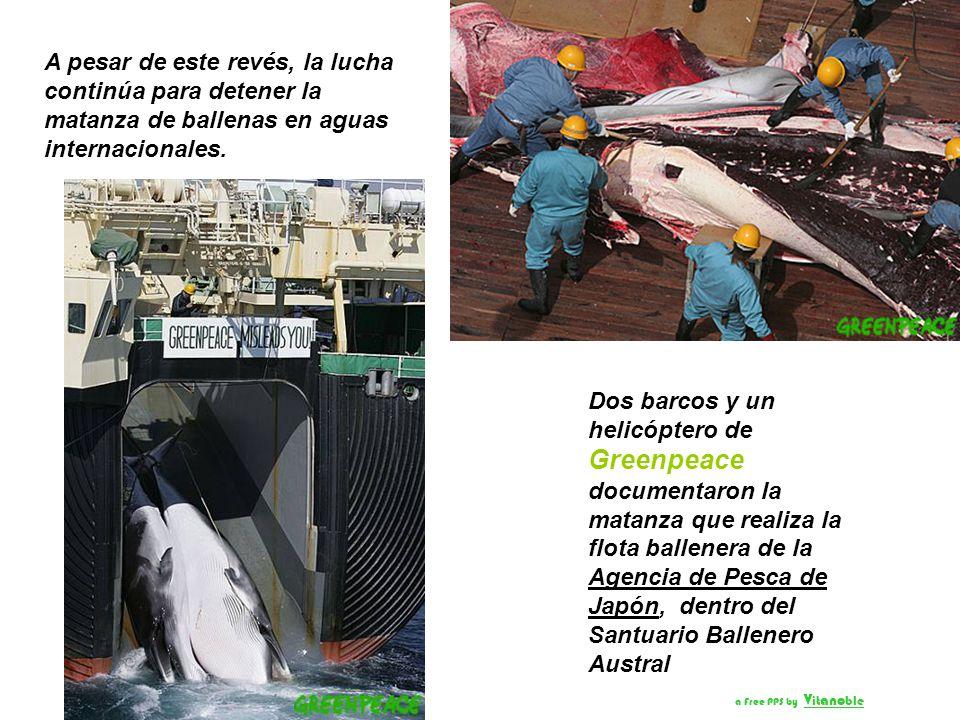 A pesar de este revés, la lucha continúa para detener la matanza de ballenas en aguas internacionales.