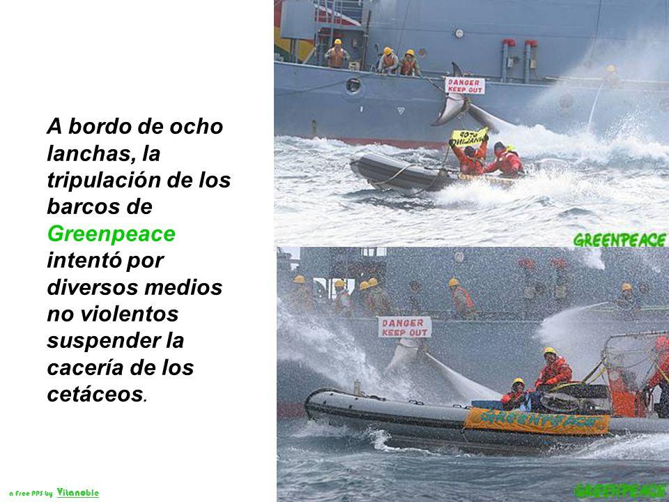 A bordo de ocho lanchas, la tripulación de los barcos de Greenpeace intentó por diversos medios no violentos suspender la cacería de los cetáceos.