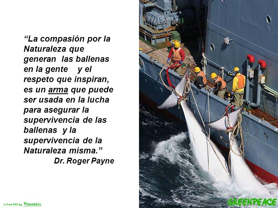La compasión por la Naturaleza que generan las ballenas en la gente y el respeto que inspiran, es un arma que puede ser usada en la lucha para asegurar la supervivencia de las ballenas y la supervivencia de la Naturaleza misma.