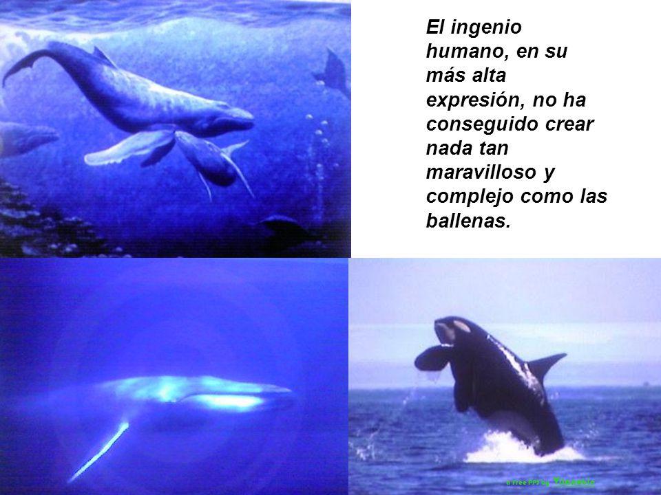 El ingenio humano, en su más alta expresión, no ha conseguido crear nada tan maravilloso y complejo como las ballenas.