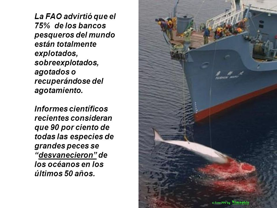 La FAO advirtió que el 75% de los bancos pesqueros del mundo están totalmente explotados, sobreexplotados, agotados o recuperándose del agotamiento.