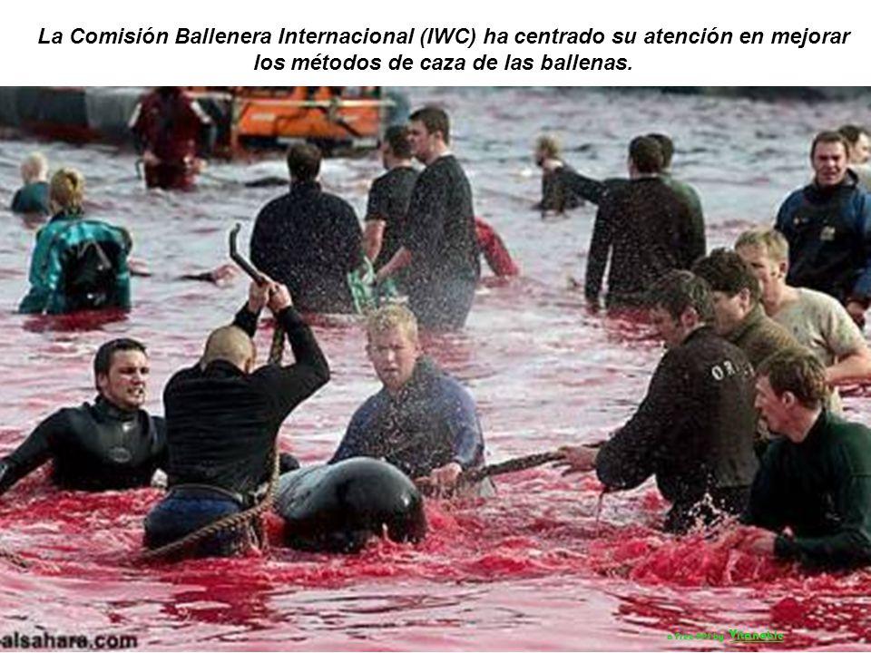 La Comisión Ballenera Internacional (IWC) ha centrado su atención en mejorar los métodos de caza de las ballenas.