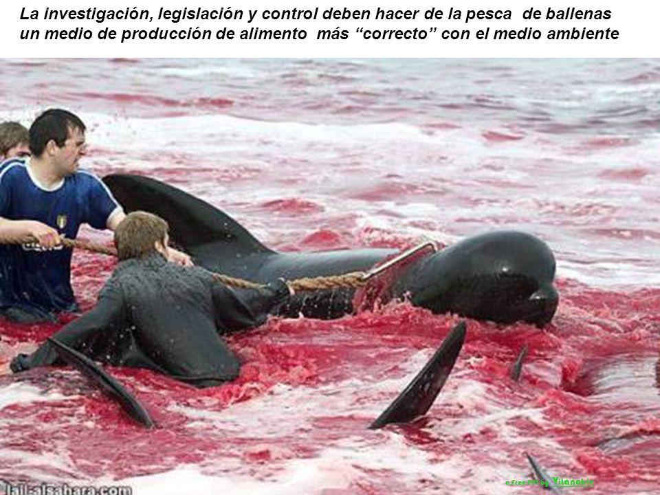 La investigación, legislación y control deben hacer de la pesca de ballenas un medio de producción de alimento más correcto con el medio ambiente