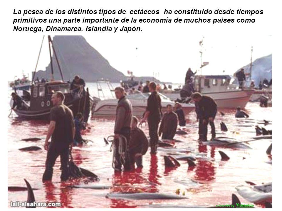 La pesca de los distintos tipos de cetáceos ha constituido desde tiempos primitivos una parte importante de la economía de muchos paises como Noruega, Dinamarca, Islandia y Japón.