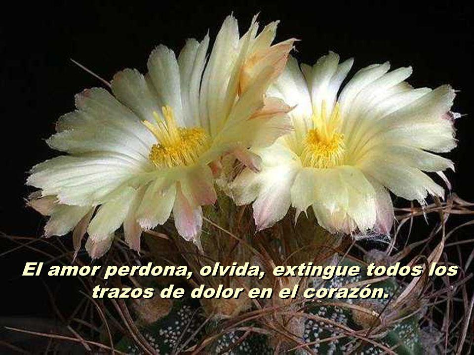 2 El amor perdona, olvida, extingue todos los trazos de dolor en el corazón.