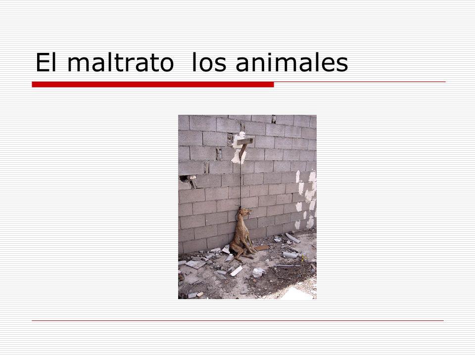 El maltrato los animales