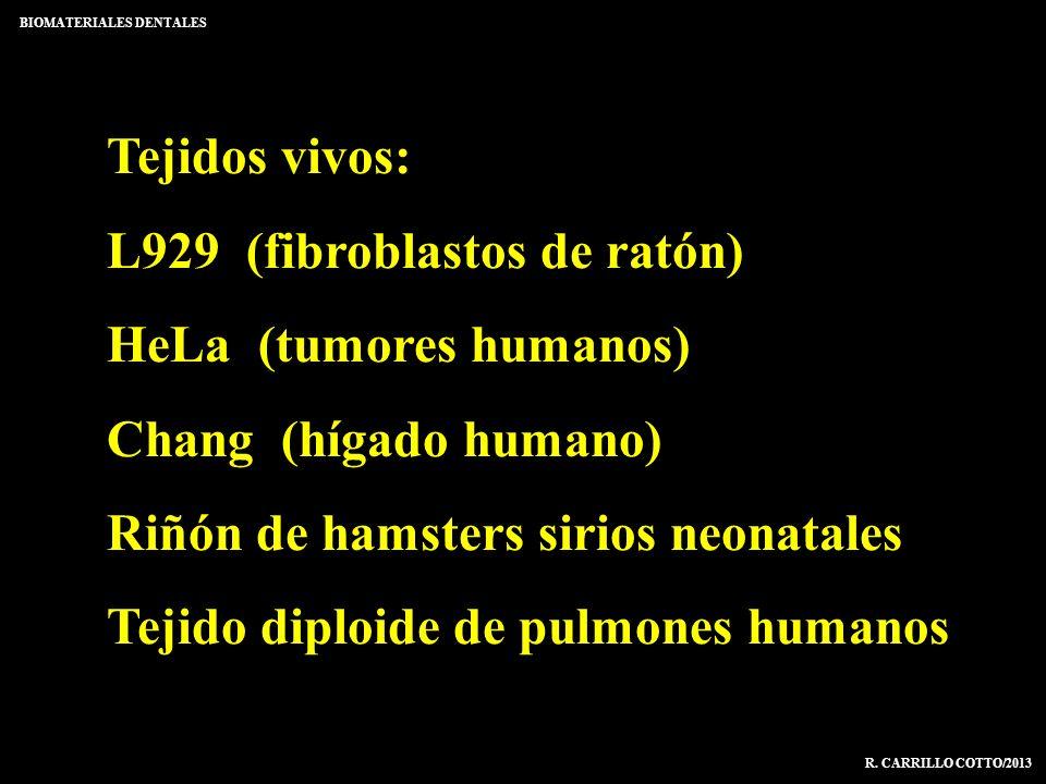 L929 (fibroblastos de ratón) HeLa (tumores humanos)