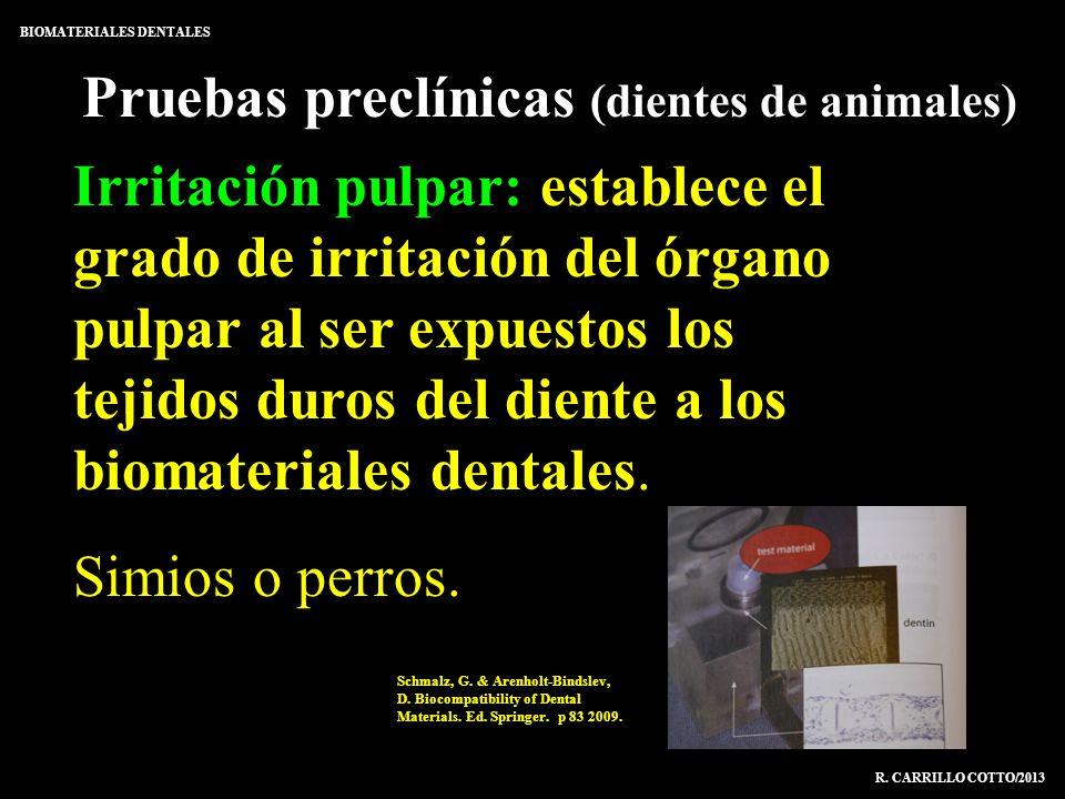 Pruebas preclínicas (dientes de animales)