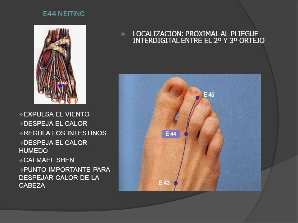 E44 NEITINGLOCALIZACION: PROXIMAL AL PLIEGUE INTERDIGITAL ENTRE EL 2º Y 3º ORTEJO. EXPULSA EL VIENTO.