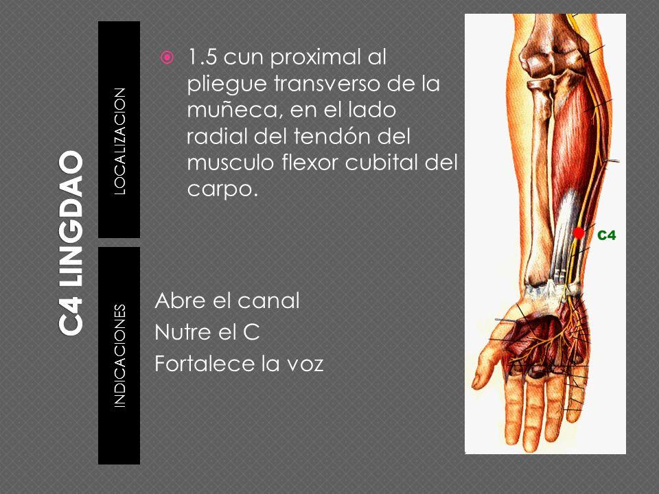 C4 LINGDAO LOCALIZACION. 1.5 cun proximal al pliegue transverso de la muñeca, en el lado radial del tendón del musculo flexor cubital del carpo.