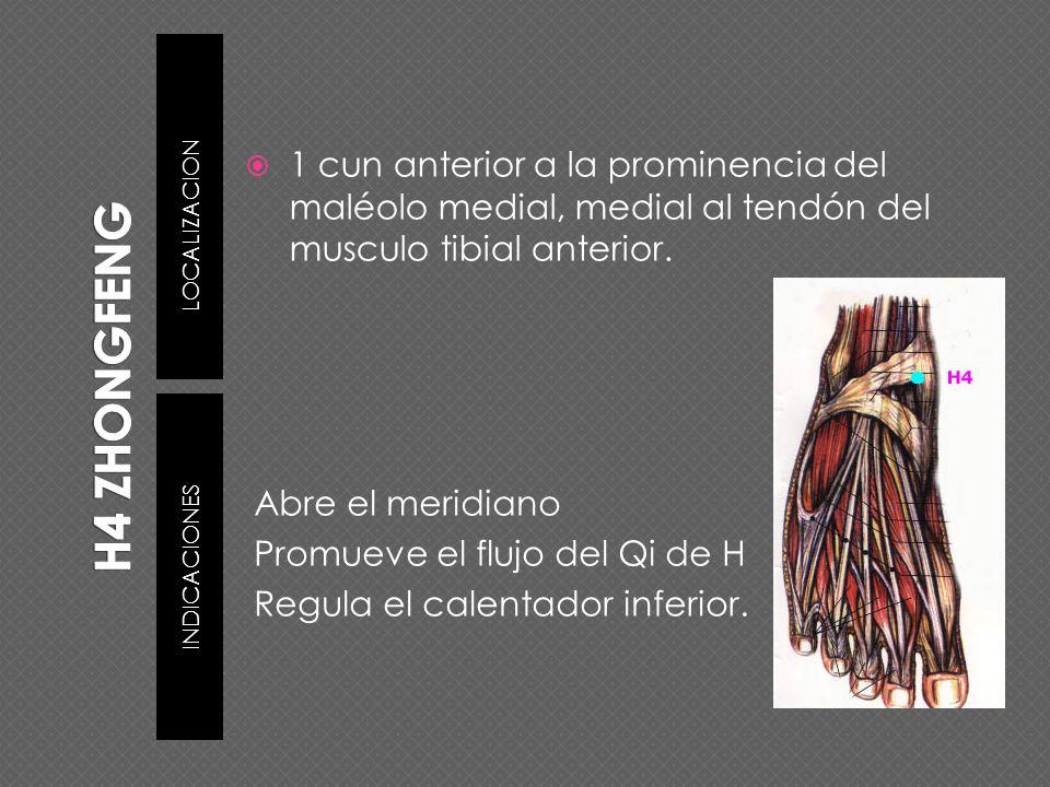 H4 ZHONGFENG LOCALIZACION. 1 cun anterior a la prominencia del maléolo medial, medial al tendón del musculo tibial anterior.