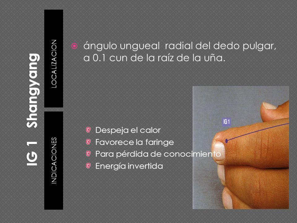 IG 1 ShangyangLOCALIZACION. ángulo ungueal radial del dedo pulgar, a 0.1 cun de la raíz de la uña.