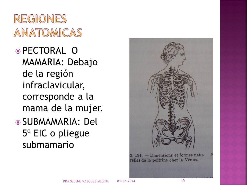 REGIONES ANATOMICAS PECTORAL O MAMARIA: Debajo de la región infraclavicular, corresponde a la mama de la mujer.