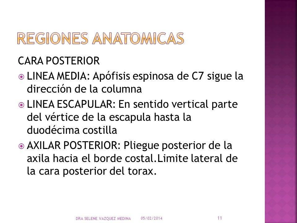 REGIONES ANATOMICAS CARA POSTERIOR