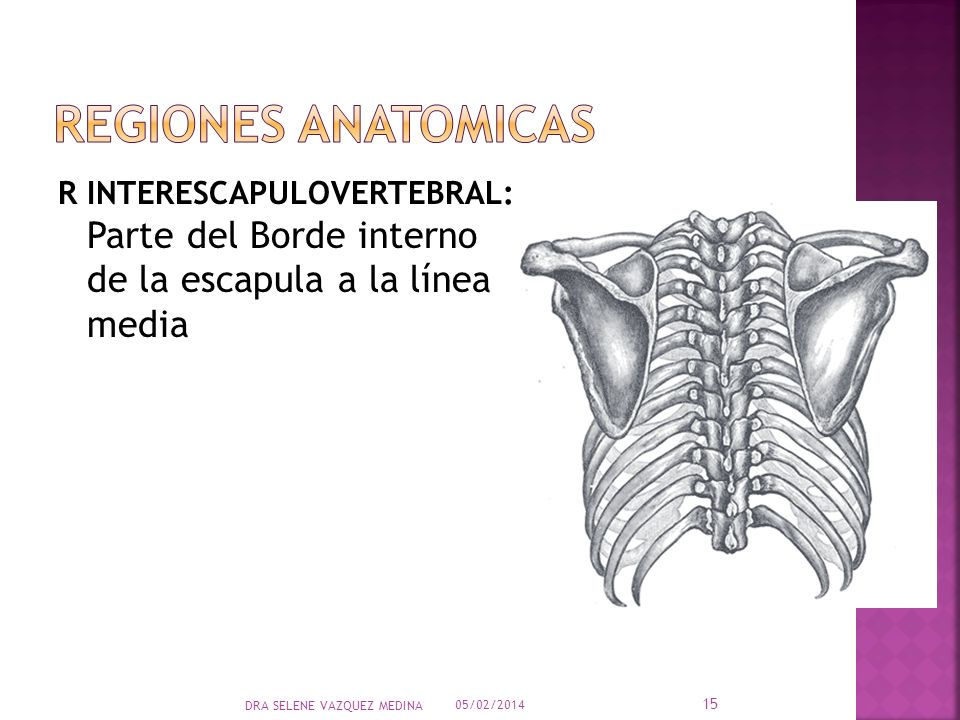 REGIONES ANATOMICAS R INTERESCAPULOVERTEBRAL: Parte del Borde interno de la escapula a la línea media.
