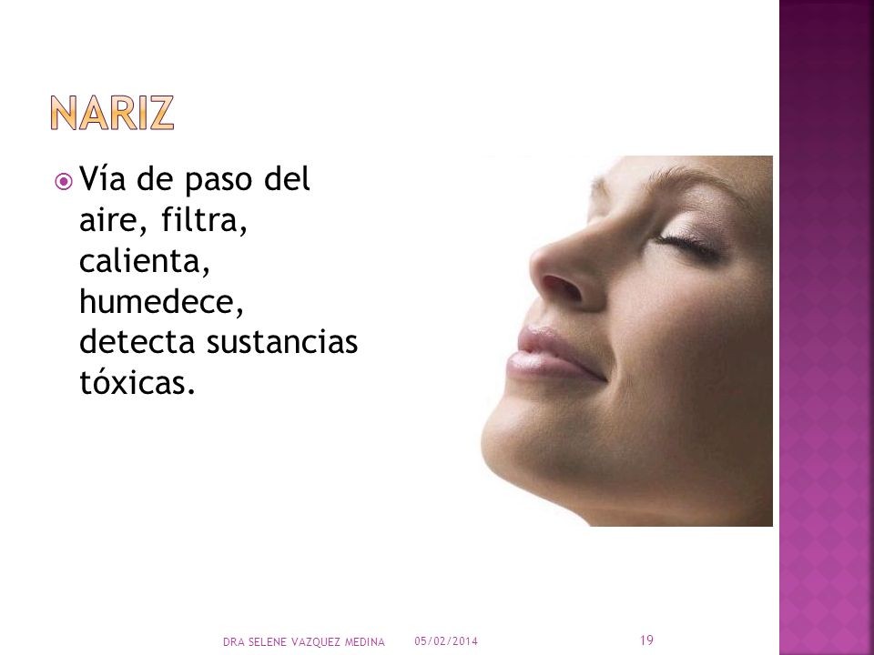 nariz Vía de paso del aire, filtra, calienta, humedece, detecta sustancias tóxicas. DRA SELENE VAZQUEZ MEDINA.
