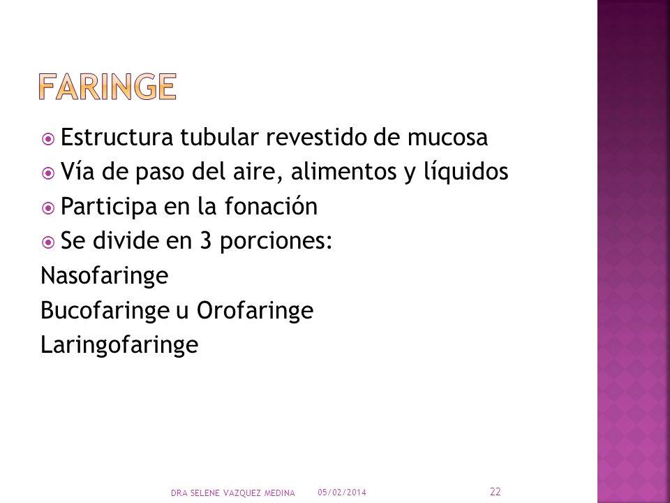 faringe Estructura tubular revestido de mucosa