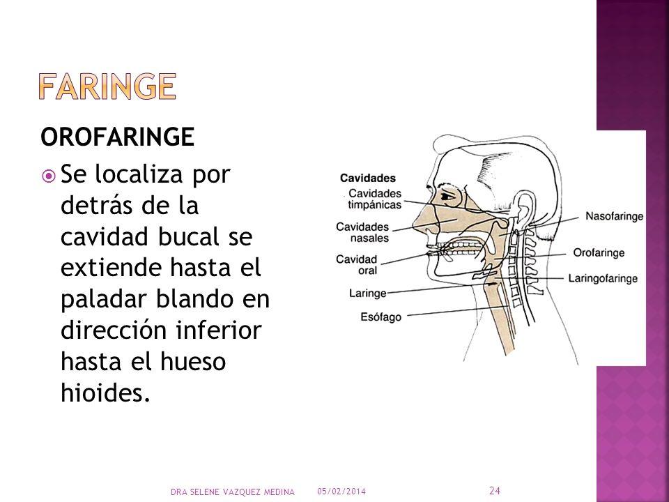faringe OROFARINGE.