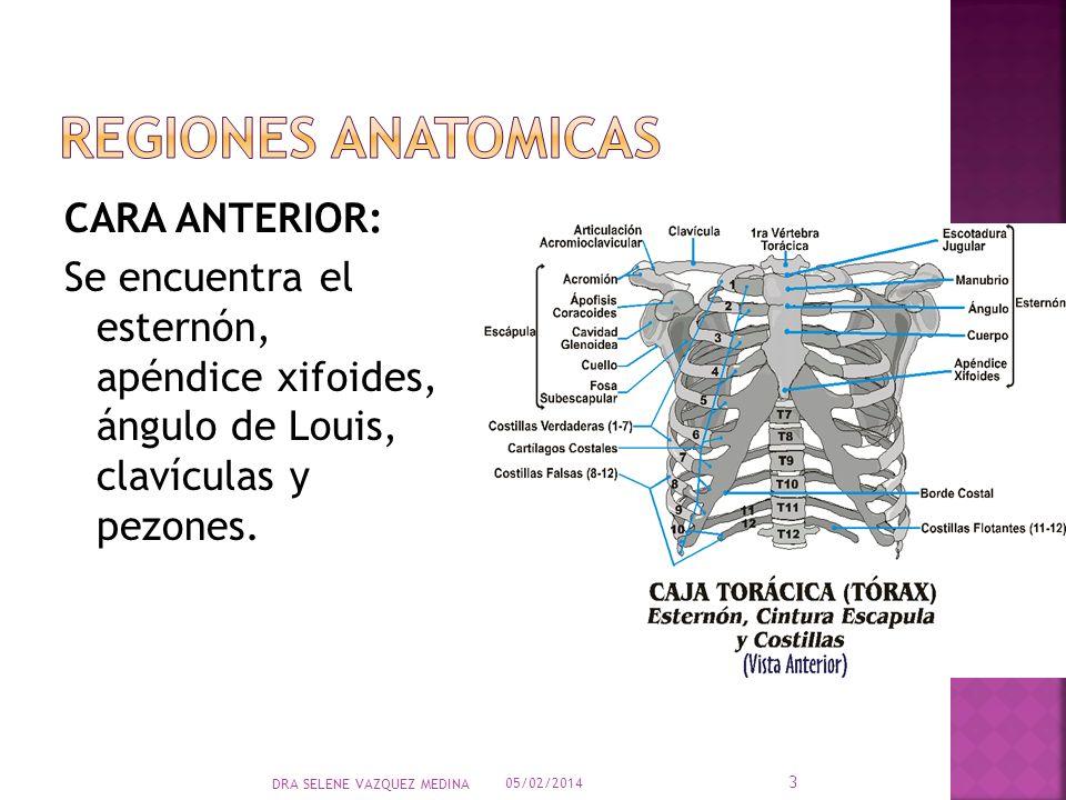 REGIONES ANATOMICASCARA ANTERIOR: Se encuentra el esternón, apéndice xifoides, ángulo de Louis, clavículas y pezones.